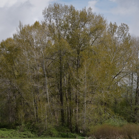 di-trees